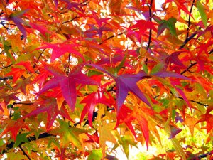 autumn-leaves-13016839608be