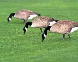 article-new-thumbnail_ehow_images_a04_jn_1a_keep-birds-eating-grass-seeds-800x800