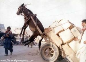 Donkey-Pulling-Cart-random-2758106-508-366