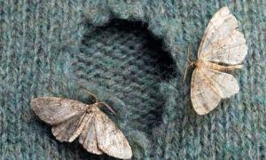 Moths-007