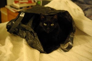 hiding cat chuck-yeager-442
