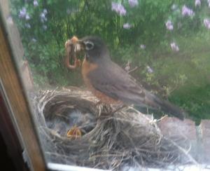 trusting birdsimg_4872