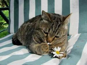 daisy emaxfpo