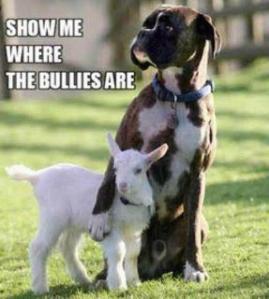 show-me-the-bullies