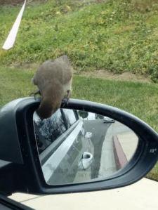 birdunnamed