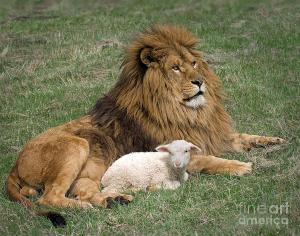 lion-and-lamb-robert-weiman