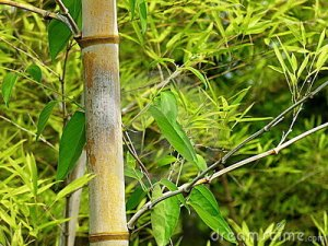 bamboo-branch-detail-18299450