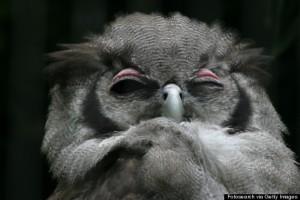 o-NIGHT-OWL-570