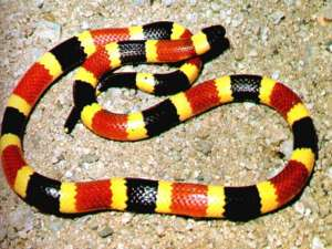 snake2112731_orig