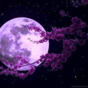 19890-Purple-Moon