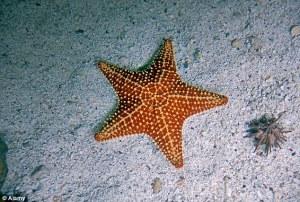 starfisharticle-0-09709821000005DC-816_634x427