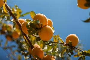 fruitnut1