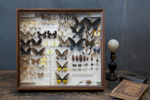 vintage-butterfly-entomology-collection5