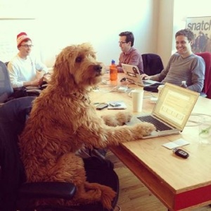 big-dog-at-conference-table-with-people