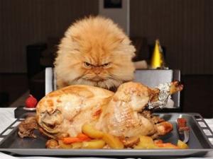 cats-turkey-dinner-thanksgiving