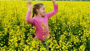 mustard flower4