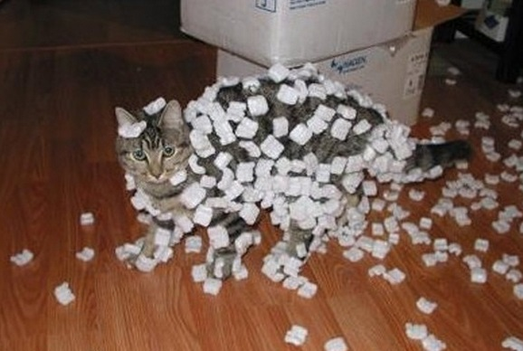 top-10-curious-cats-covered-in-packing-p