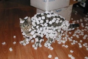 Top-10-Curious-Cats-Covered-in-Packing-Peanuts-4
