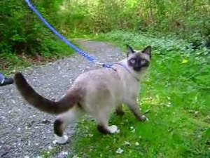 cat-on-leash