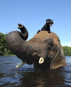 dog-elephant1-482x590