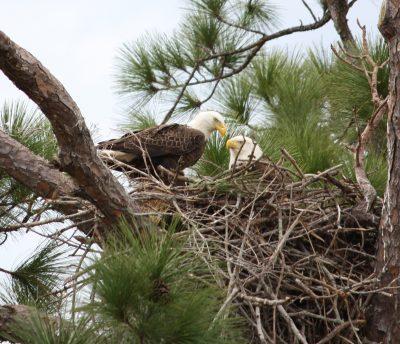 Bald Eagle S Nest Devotions By Jan